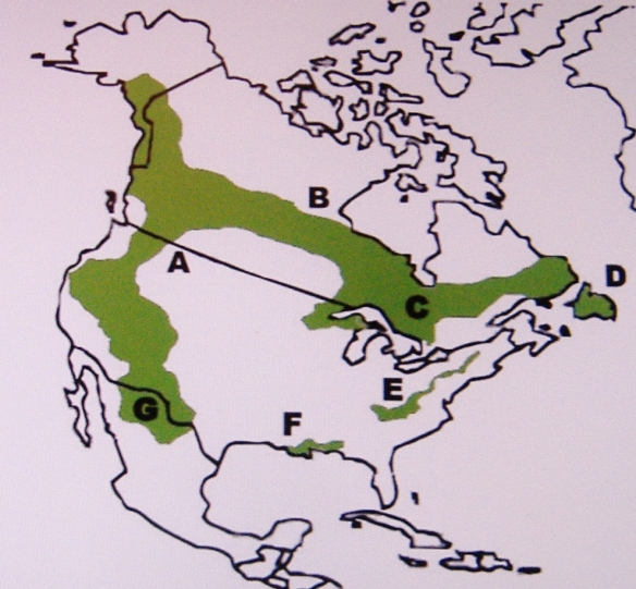 "Regionalized Variants of The North American Bush-Baby A - The Western Mountain- Baby  (Those at the northern most portion of the range are sometimes referred to as ""Alaskan Ice-Babies"") B - The Northern Boreal Forest-Baby C - The Central Canadian Bush-Baby (And the Lé Buisson-Bébé of Quebec) D - The Atlantic Wood-Babies E - The Appalachian Wild-Babies (First discovered during the colonial era.)  F - The Southern Bog-Baby (Or Baby of the Bayou)   G - The High Desert Cave-Baby (Known for living in caves along canyon walls.)"